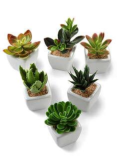 Pozsgás műnövények (6-részes)-bpc living